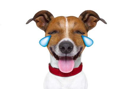 Jack Russell Terrier Emoticon oder Emoji Hund lustig dumm Schrei und Lachen, die Zunge heraus, isoliert auf weißem Hintergrund Standard-Bild