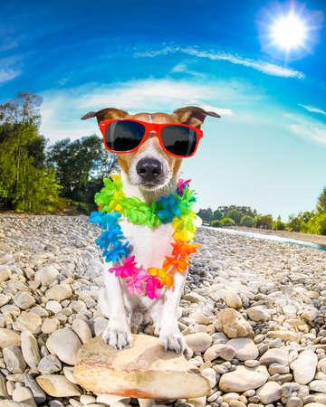 Jack-Russell-Hund entspannen und in den Sommerferien Urlaub mit Blumenkette ruht, am Flussufer Standard-Bild