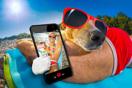 jack russell dog with owner wearing funny fancy red sunglasses, lying on hammock or beach chair lounger together as lovers or friends, on summer vacation holidays taking a selfie together Stock Photo