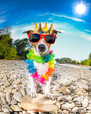 russell: jack russell dog relaxing and resting on summer vacation holidays with flower chain , at the river shore, king crown on head