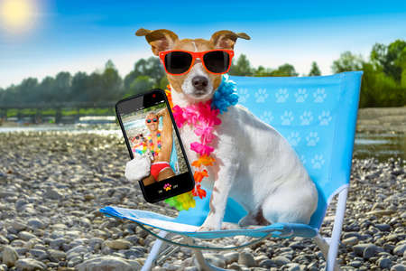 jack russell dog on a  beach chair or hammock at the beach relaxing  on summer vacation holidays, ocean or river  shore as background taking a selfie with smartphone