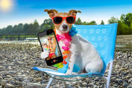 Jack-Russell-Hund auf einem Liegestuhl oder Hängematte am Strand entspannen in den Sommerferien Urlaub, Meer oder Fluss-Ufer als Hintergrund ein selfie mit Smartphone nehmen