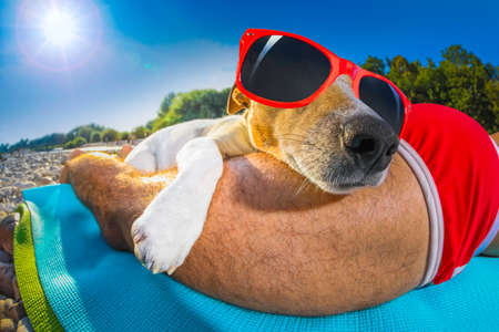 sunbath: jack russell dog  and owner sunbathing a having a siesta under a palm tree , on summer vacation holidays at the beach