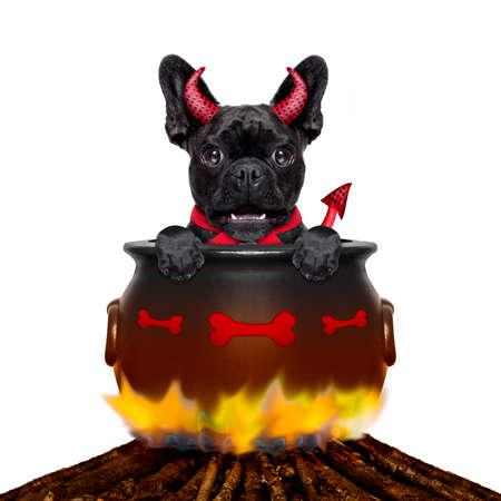 satanas: bulldog francés de halloween diablo perro ardiendo dentro de una caldera en una hoguera como una bruja, aislado en fondo blanco