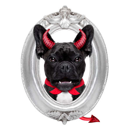 halloween devil french bulldog dog  inside a grey silver frame on the wall, isolated on white background
