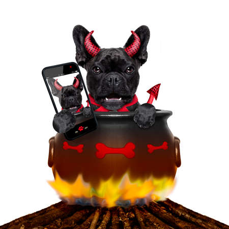 photo: french bulldog  halloween devil dog burning inside a boiler on a bonfire like a witch, isolated on white background, taking a selfie with smartphone or tablet