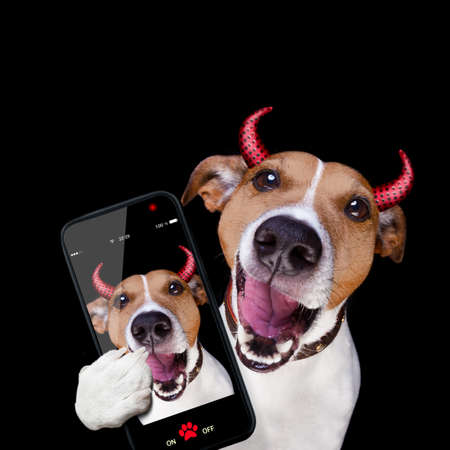 jack russell terrier dog isolated on black background looking at you  with open smacking mouth taking selfie with smartphone or tablet pc Stock Photo