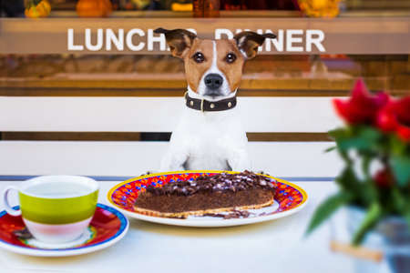 jack russell terrier  hungry dog eating a chocolate cake in restaurant table with a cup of tea