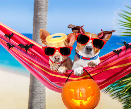 couple of dogs relaxing on a fancy red  hammock with sunglasses and a pumpkin lantern for halloween holidays