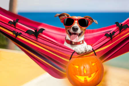 happy holidays: dog relaxing on a fancy red  hammock with sunglasses and a pumpkin lantern for halloween holidays
