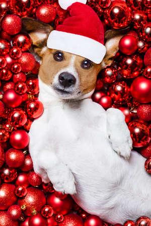 poblíž: Jack Russell teriér Pes s kloboukem Santa Claus na vánoční svátky odpočívá na vánočními koule pozadí Reklamní fotografie