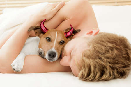 jack russell terrier dog  looking at you  under blanket in bedroom with owner   for halloween with devil horns