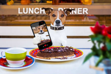 jack russell terrier  hungry dog eating a chocolate cake in restaurant table , taking a selfie with smartphone Stock Photo