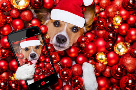 occupation: jack russell terrier  dog with santa claus hat for christmas holidays resting on a xmas balls background taking a selfie with smartphone or camera Stock Photo
