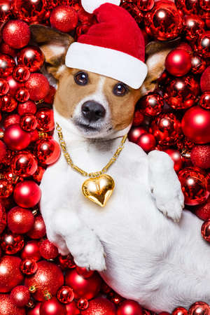 white background: jack russell terrier  dog with santa claus hat for christmas holidays resting on a xmas balls background Stock Photo
