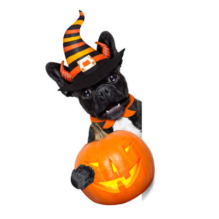 lamp light: halloween  witch french bulldog  dog  dressed as a bad devil with red cape holding a pumpkin , side banner or placard ,isolated on white background Stock Photo