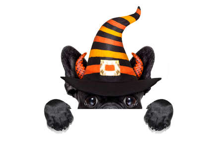 halloween  witch french bulldog  dog  dressed as a bad devil behind blank banner or placard, isolated on white background Stock Photo - 64220418