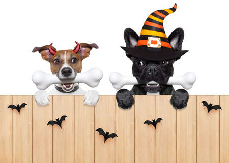 row and group of halloween hungry dogs  in front of wall, isolated on white background,bones in mouth