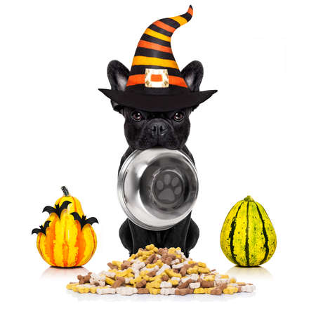 french bulldog  halloween hungry dog holding food bowl, isolated on white background Stock Photo