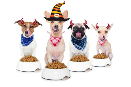 row and group of halloween hungry dogs  in front of food bowls, isolated on white background