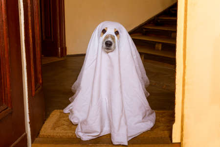died: dog sit as a ghost for halloween in front of the door  at home entrance with pumpkin lantern or  light , scary and spooky Stock Photo
