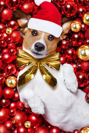 jack russell terrier  dog with santa claus hat for christmas holidays resting on a xmas balls background Stock Photo