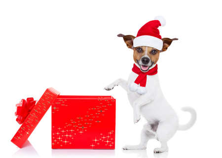 decoration: jack russell dog with red  christmas santa claus hat  for xmas holidays and a gift or present box