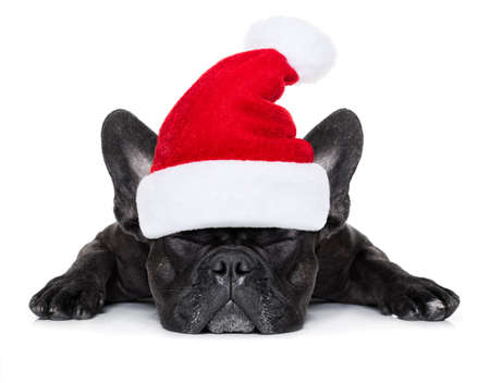 new years: french bulldog dog with red  christmas santa claus hat  for xmas holidays sleeping , isolated on white background