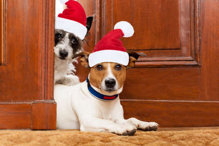 couple of dogs with red  christmas santa claus hat  for xmas holidays waiting at door entrance at home