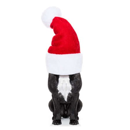 new years: french bulldog dog with red  christmas santa claus hat  for xmas holidays hiding under the red hood
