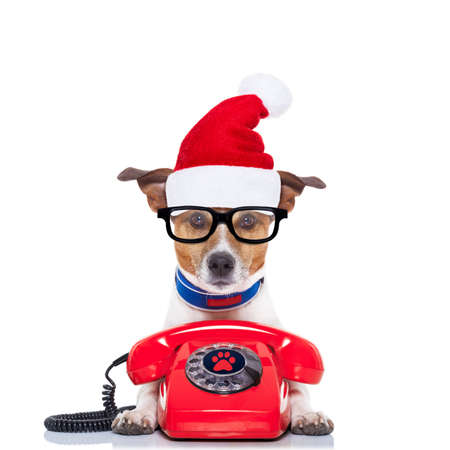 jack russell dog with red  christmas santa claus hat  for xmas holidays calling on the phone or telephone
