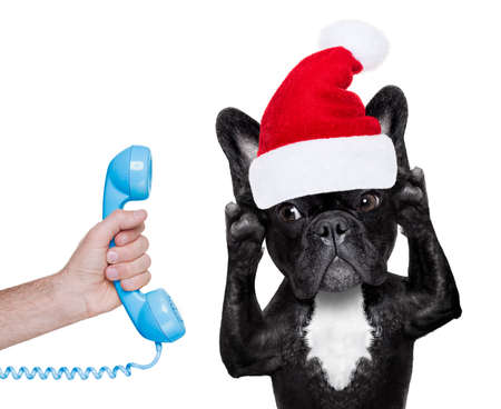 telephone interview: french bulldog dog with red  christmas santa claus hat  for xmas holidays calling on the phone or telephone