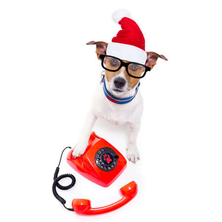 communication: jack russell dog with red  christmas santa claus hat  for xmas holidays calling on the phone or telephone