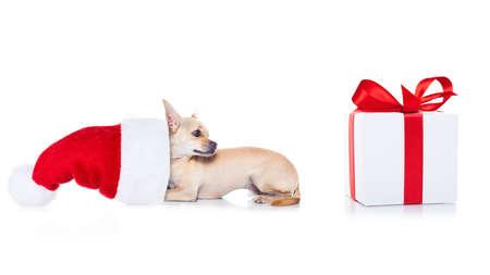Chihuahua Hund mit Weihnachten roten Hut Santa Claus für Weihnachten Feiertage und ein Geschenk oder ein Geschenk-Box