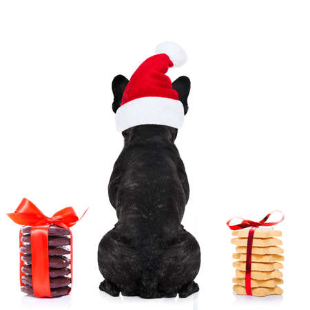happy holidays: french bulldog dog with red  christmas santa claus hat  for xmas holidays from behind and back torso with  cookies and biscuits