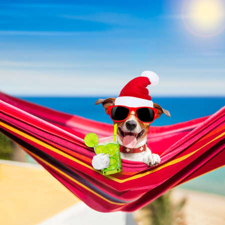 jack russell dog relaxing on a fancy red  hammock  with cocktail, with santa hat for christmas holidays