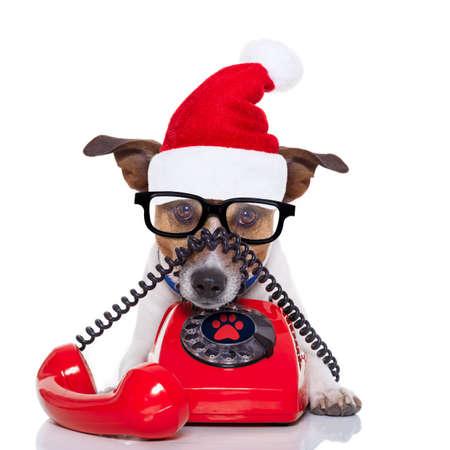 gente comunicandose: perro Jack Russell con el sombrero rojo de Navidad de Santa Claus para las vacaciones de navidad Invitación del teléfono o teléfono