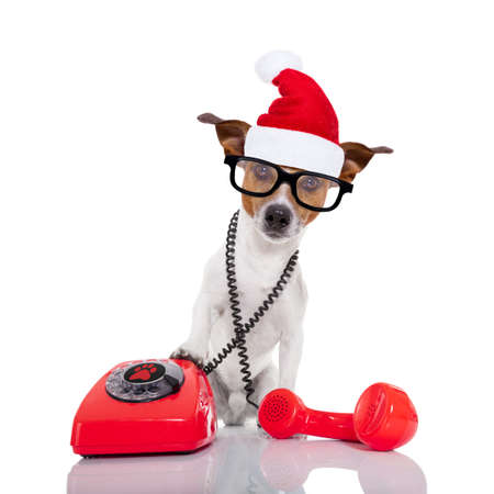 telephone interview: jack russell dog with red  christmas santa claus hat  for xmas holidays calling on the phone or telephone