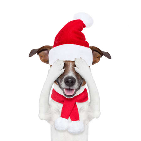 hid: jack russell dog with red  christmas santa claus hat  for xmas holiday hiding with closed eyes
