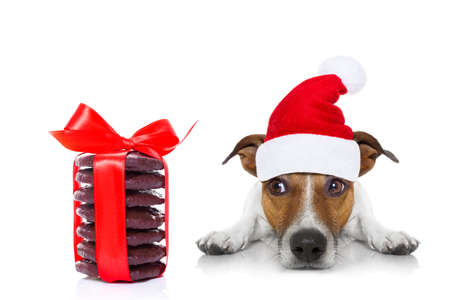 shiny background: jack russell dog with red  christmas santa claus hat  for xmas holidays and a gift of cookies or treats Stock Photo