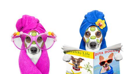 perros graciosos: Jack Russell par de perros que se relajan con máscara de belleza en el centro de spa y de bienestar máscara de crema hidratante y pepino, aislado en fondo blanco