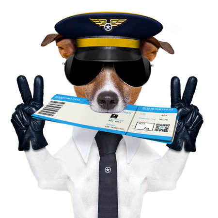 funny glasses: jack russell airline pilot or  flight attendant dog , with check in boarding pass ticket in mouth , isolated on white background, peace and victory fingers