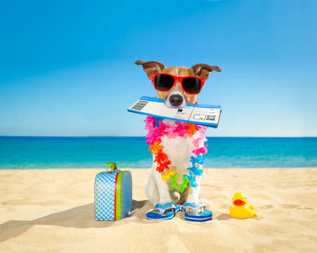 funny glasses: jack russell dog relaxing in summer vacation holidays with check in boarding pass ticket and bag or luggage at the ocean beach Stock Photo