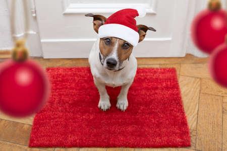 Jack Russell hond te wachten een de deur in huis met lederen riem, klaar om te gaan voor een wandeling met zijn eigenaar voor kerst ot xmas vakantie met rode hoed van de Kerstman Stockfoto