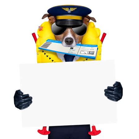 board: jack russell airline pilot or  flight attendant dog , with check in boarding pass ticket in mouth , isolated on white background, holding a placard banner or blackboard