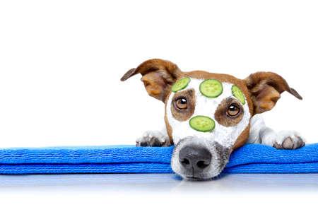 ジャック ラッセル犬美容マスク スパ ウェルネス センターでリラックスできる保湿クリーム マスクとキュウリ、白い背景で隔離 写真素材