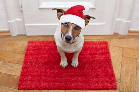 obediencia: Jack Russell perro esperando una la puerta de casa con correa de cuero, listo para ir a dar un paseo con su dueño para las vacaciones de Navidad con sombrero rojo de Papá Noel