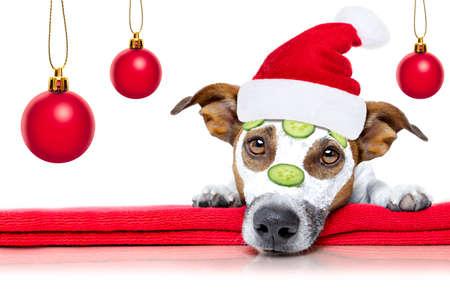 Jack Russell pes relaxační s krásou maskou v lázeňském wellness centru Reklamní fotografie