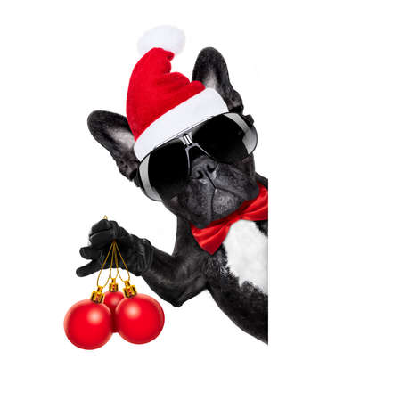 santa claus christmas dog  isolated on white background, holding xmas decoration balls isolated on white background Stock Photo