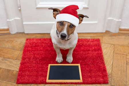 jack russell dog  waiting a the door at home with leather leash, ready to go for a walk with his owner for christmas holidays  with blackboard placard banner with red santa claus hat